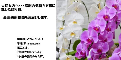 花寅の通販ページ